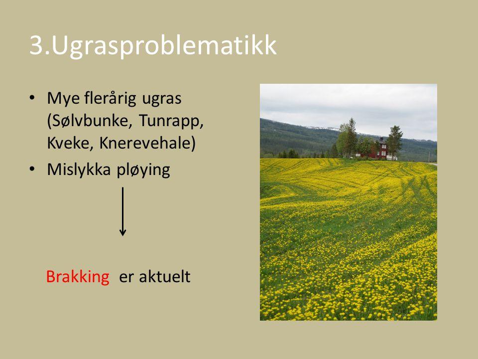 3.Ugrasproblematikk Mye flerårig ugras (Sølvbunke, Tunrapp, Kveke, Knerevehale) Mislykka pløying Brakking er aktuelt
