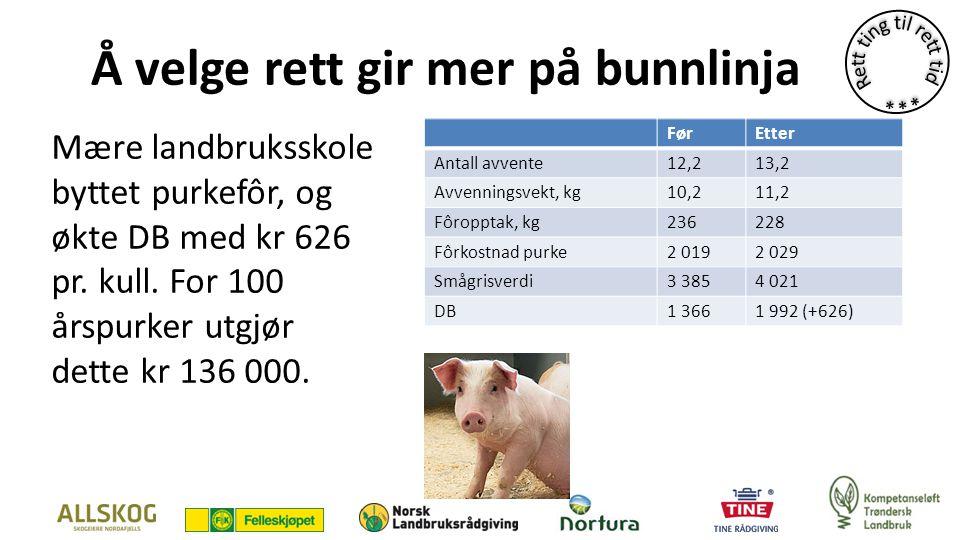 Å velge rett gir mer på bunnlinja Mære landbruksskole byttet purkefôr, og økte DB med kr 626 pr.