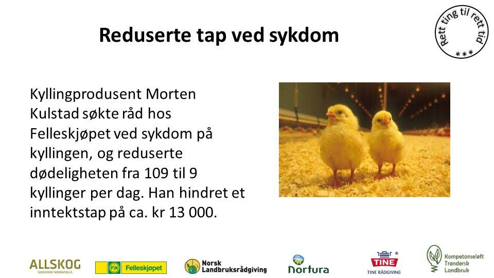 Reduserte tap ved sykdom Kyllingprodusent Morten Kulstad søkte råd hos Felleskjøpet ved sykdom på kyllingen, og reduserte dødeligheten fra 109 til 9 kyllinger per dag.
