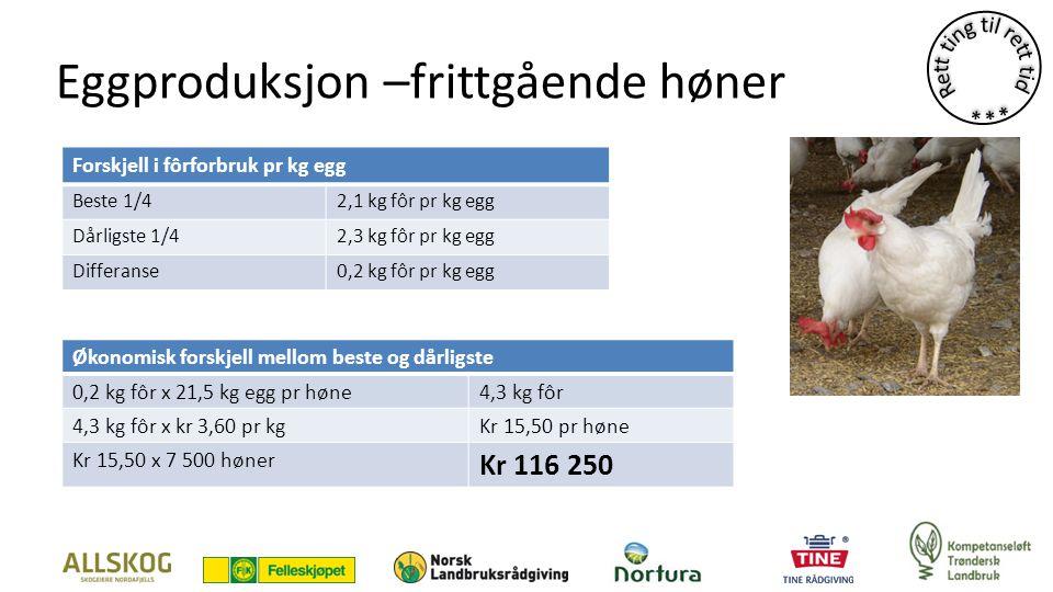 Eggproduksjon –frittgående høner Forskjell i fôrforbruk pr kg egg Beste 1/42,1 kg fôr pr kg egg Dårligste 1/42,3 kg fôr pr kg egg Differanse0,2 kg fôr pr kg egg Økonomisk forskjell mellom beste og dårligste 0,2 kg fôr x 21,5 kg egg pr høne4,3 kg fôr 4,3 kg fôr x kr 3,60 pr kgKr 15,50 pr høne Kr 15,50 x 7 500 høner Kr 116 250