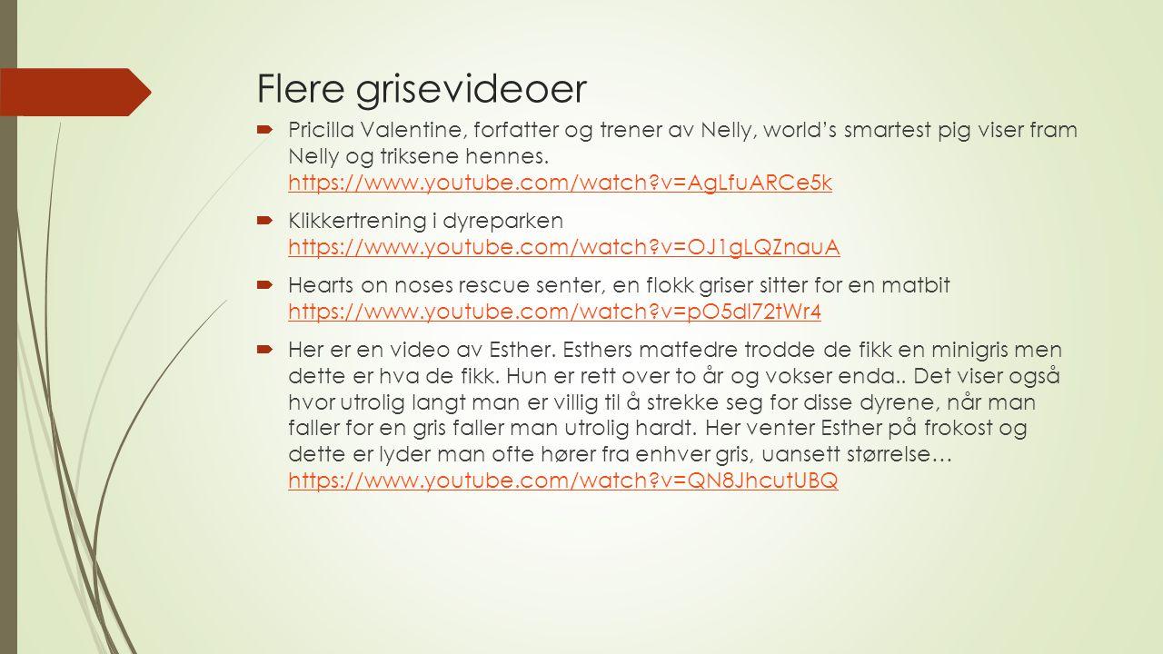 Flere grisevideoer  Pricilla Valentine, forfatter og trener av Nelly, world's smartest pig viser fram Nelly og triksene hennes. https://www.youtube.c