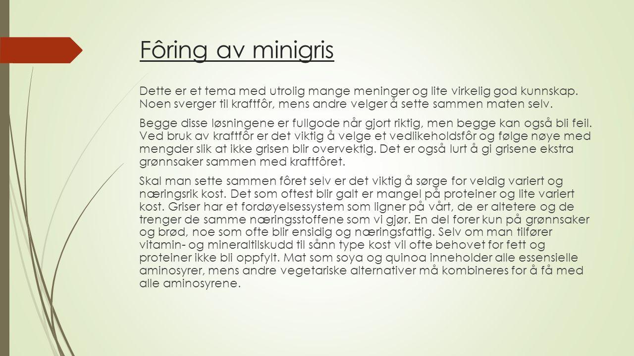 Fôring av minigris Dette er et tema med utrolig mange meninger og lite virkelig god kunnskap. Noen sverger til kraftfôr, mens andre velger å sette sam