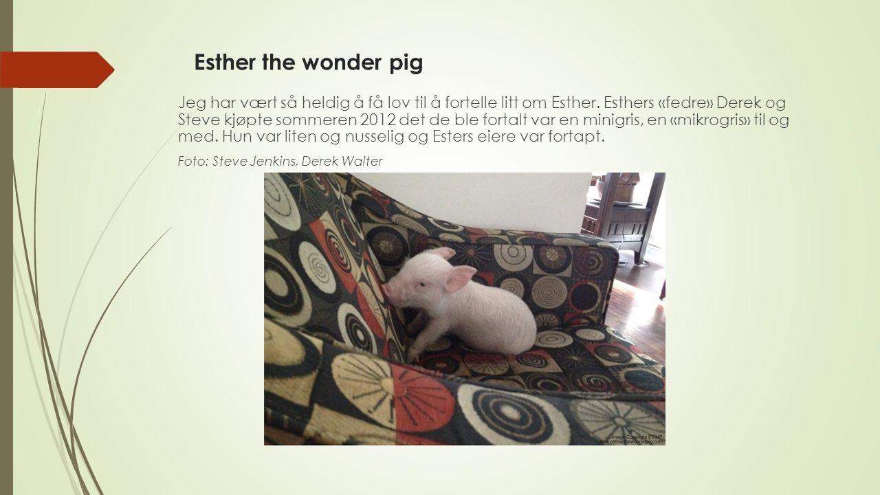 Esther the wonder pig Jeg har vært så heldig å få lov til å fortelle litt om Esther. Esthers «fedre» Derek og Steve kjøpte sommeren 2012 det de ble fo