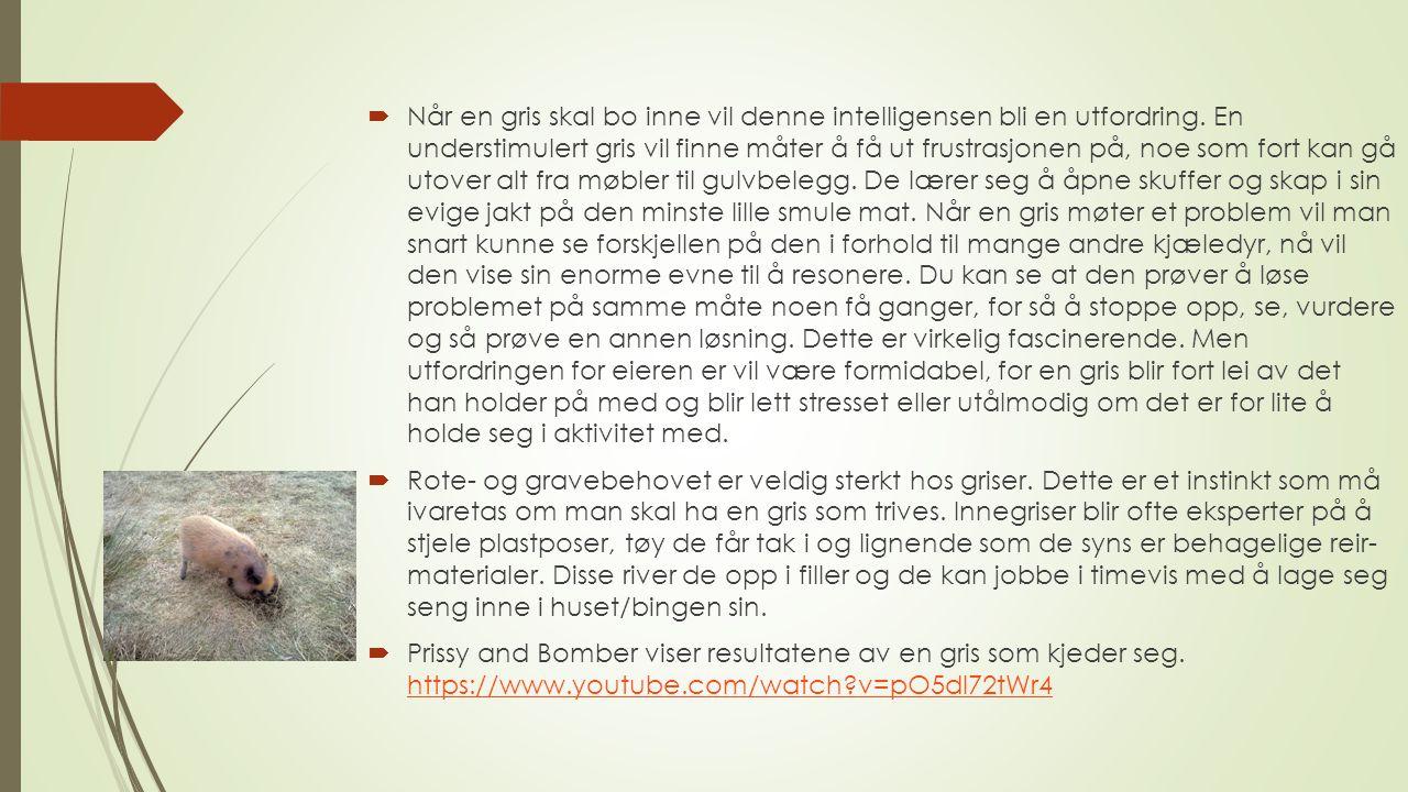 Historien til Gisle gris Gisle ble solgt til en eldre dame av en oppdretter som lovte en gris på 20 kg.
