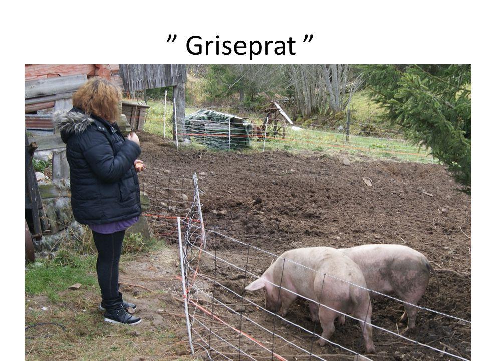""" Griseprat """