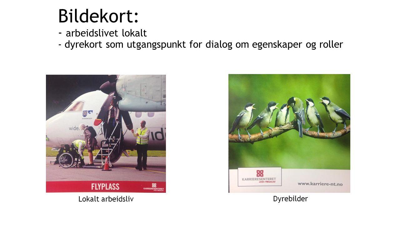 Bildekort: - arbeidslivet lokalt - dyrekort som utgangspunkt for dialog om egenskaper og roller Dyrebilder Lokalt arbeidsliv