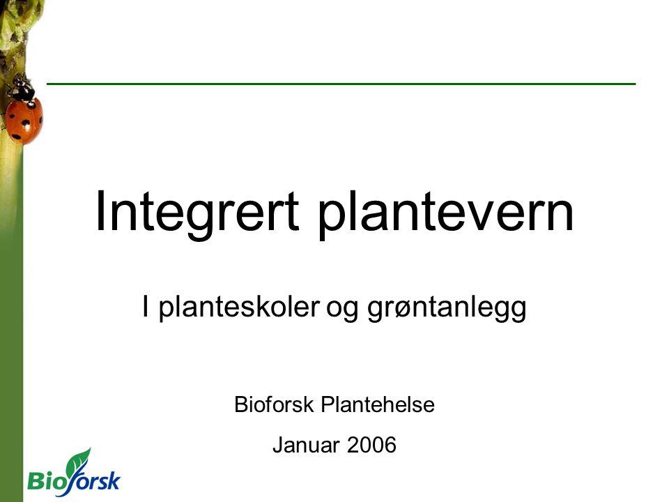 Integrert plantevern I planteskoler og grøntanlegg Bioforsk Plantehelse Januar 2006