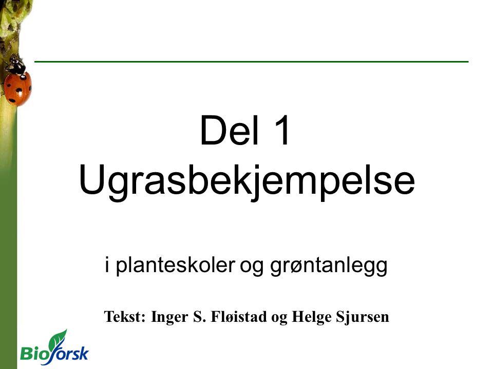 Del 1 Ugrasbekjempelse i planteskoler og grøntanlegg Tekst: Inger S. Fløistad og Helge Sjursen