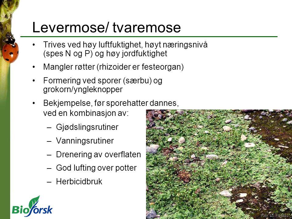 Levermose/ tvaremose Trives ved høy luftfuktighet, høyt næringsnivå (spes N og P) og høy jordfuktighet Mangler røtter (rhizoider er festeorgan) Former