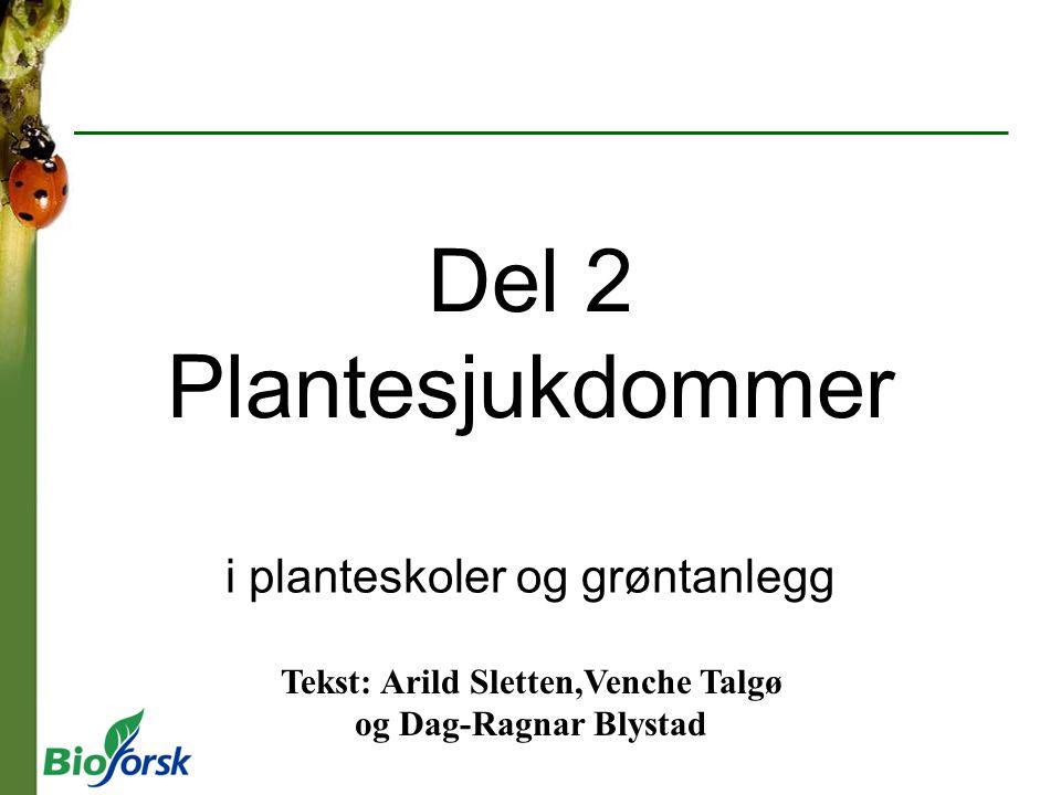 Del 2 Plantesjukdommer i planteskoler og grøntanlegg Tekst: Arild Sletten,Venche Talgø og Dag-Ragnar Blystad