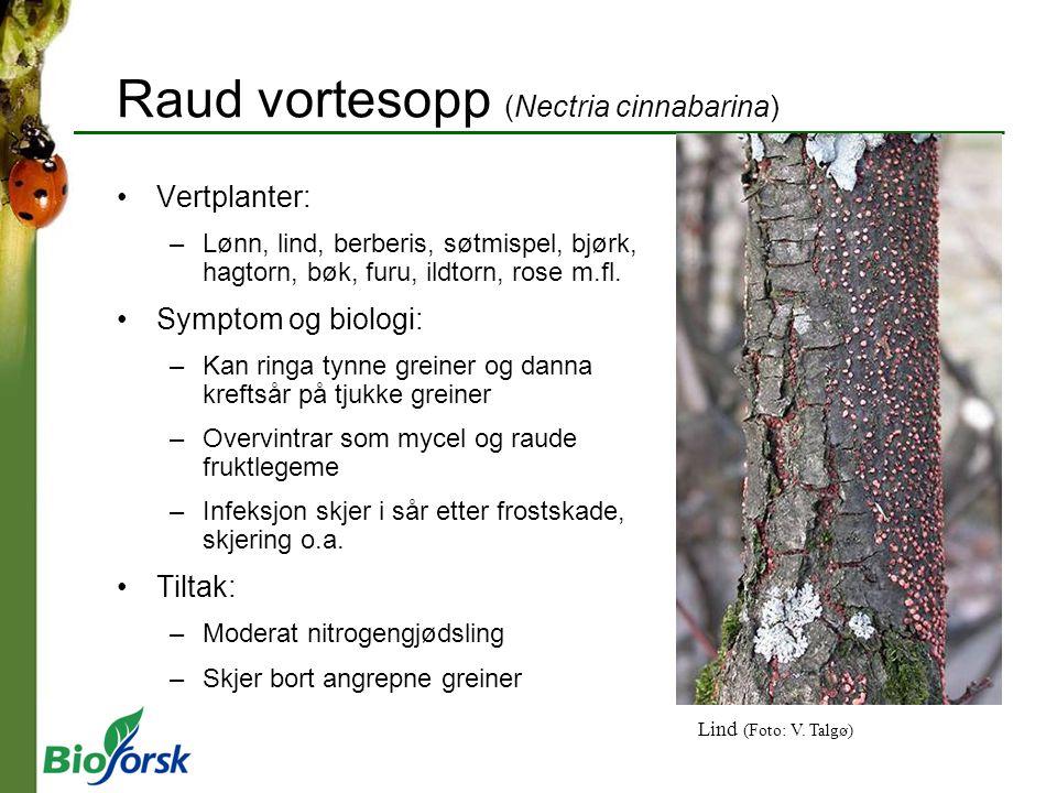 Raud vortesopp (Nectria cinnabarina) Vertplanter: –Lønn, lind, berberis, søtmispel, bjørk, hagtorn, bøk, furu, ildtorn, rose m.fl. Symptom og biologi: