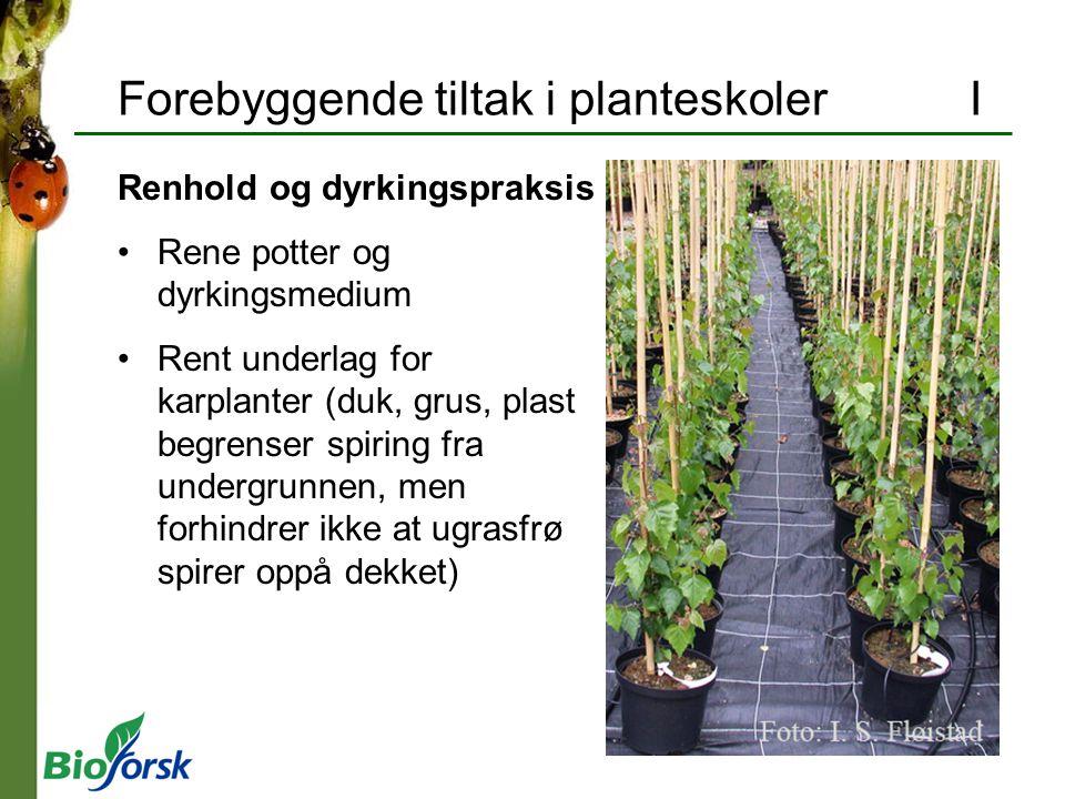 Forebyggende tiltak i planteskoler I Renhold og dyrkingspraksis Rene potter og dyrkingsmedium Rent underlag for karplanter (duk, grus, plast begrenser
