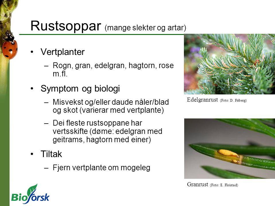 Rustsoppar (mange slekter og artar) Vertplanter –Rogn, gran, edelgran, hagtorn, rose m.fl. Symptom og biologi –Misvekst og/eller daude nåler/blad og s