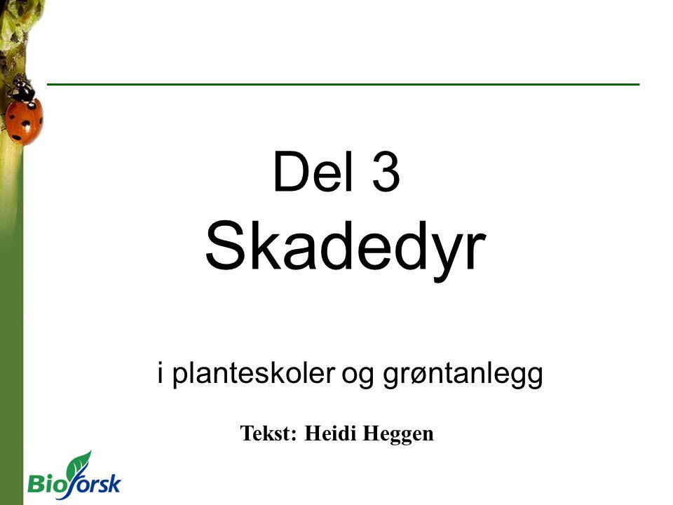 Del 3 Skadedyr i planteskoler og grøntanlegg Tekst: Heidi Heggen