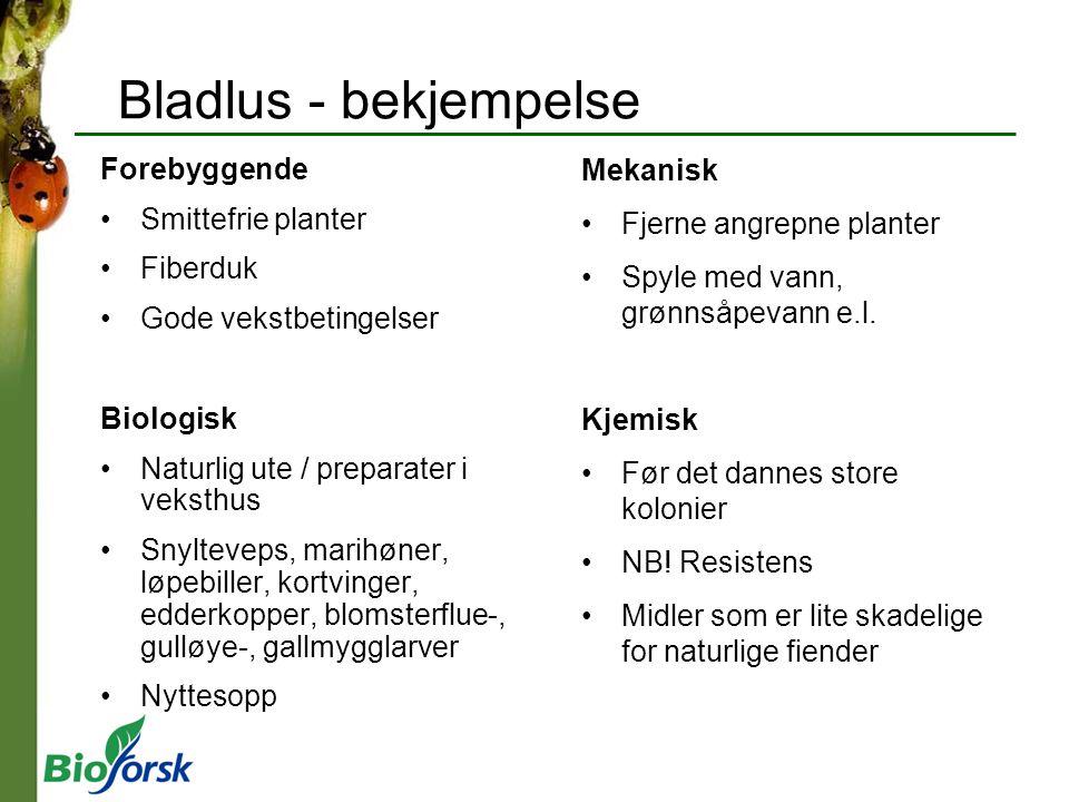 Bladlus - bekjempelse Forebyggende Smittefrie planter Fiberduk Gode vekstbetingelser Biologisk Naturlig ute / preparater i veksthus Snylteveps, marihø