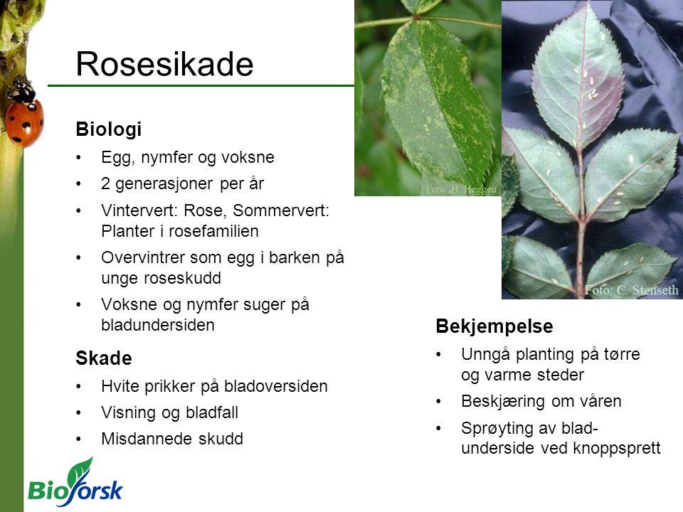 Rosesikade Biologi Egg, nymfer og voksne 2 generasjoner per år Vintervert: Rose, Sommervert: Planter i rosefamilien Overvintrer som egg i barken på un