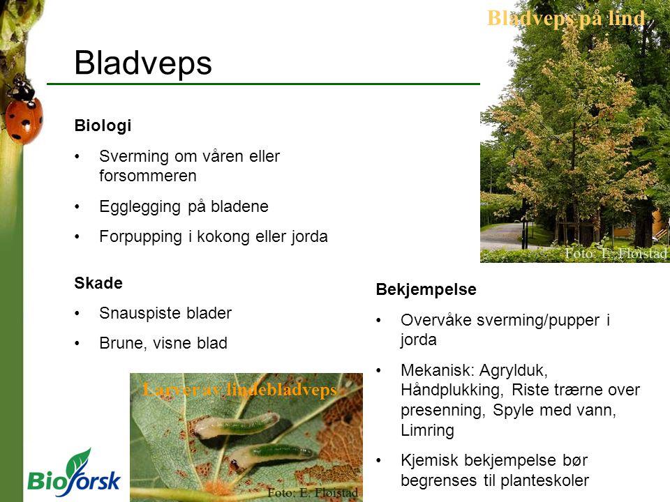 Bladveps Biologi Sverming om våren eller forsommeren Egglegging på bladene Forpupping i kokong eller jorda Skade Snauspiste blader Brune, visne blad B