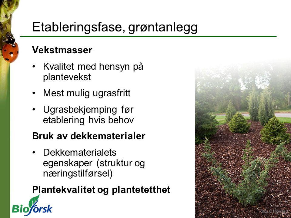 Etableringsfase, grøntanlegg Vekstmasser Kvalitet med hensyn på plantevekst Mest mulig ugrasfritt Ugrasbekjemping før etablering hvis behov Bruk av de