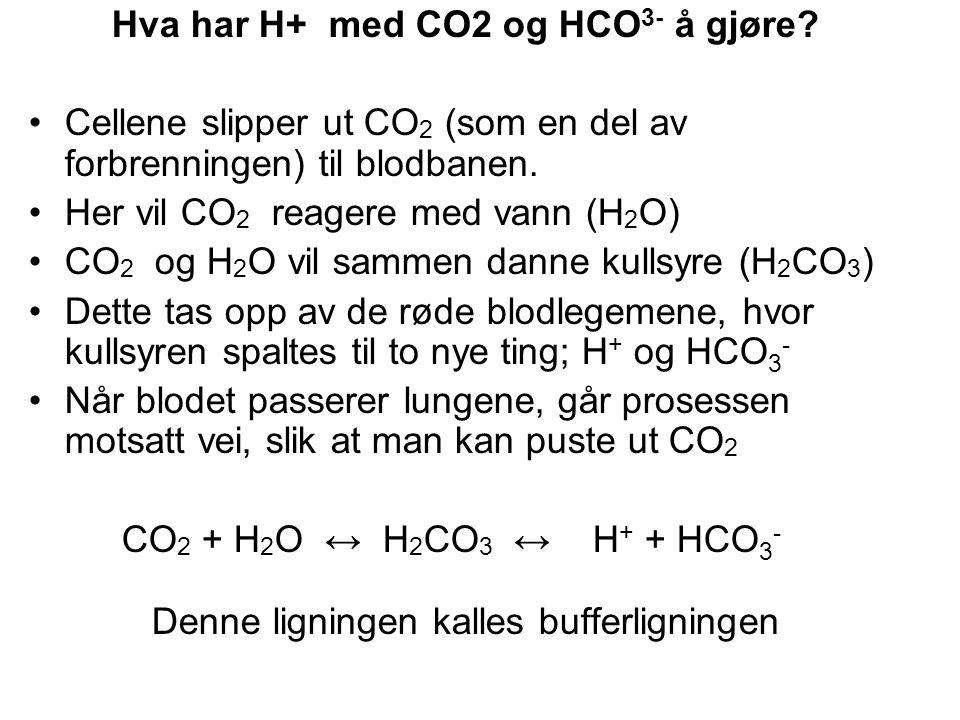 Hva har H+ med CO2 og HCO 3- å gjøre.