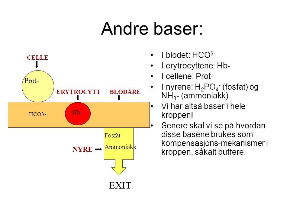 Andre baser: I blodet: HCO 3- I erytrocyttene: Hb- I cellene: Prot- I nyrene: H 2 PO 4 - (fosfat) og NH 3 - (ammoniakk) Vi har altså baser i hele kroppen.