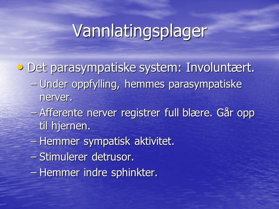 Vannlatingsplager Det parasympatiske system: Involuntært. Det parasympatiske system: Involuntært. –Under oppfylling, hemmes parasympatiske nerver. –Af