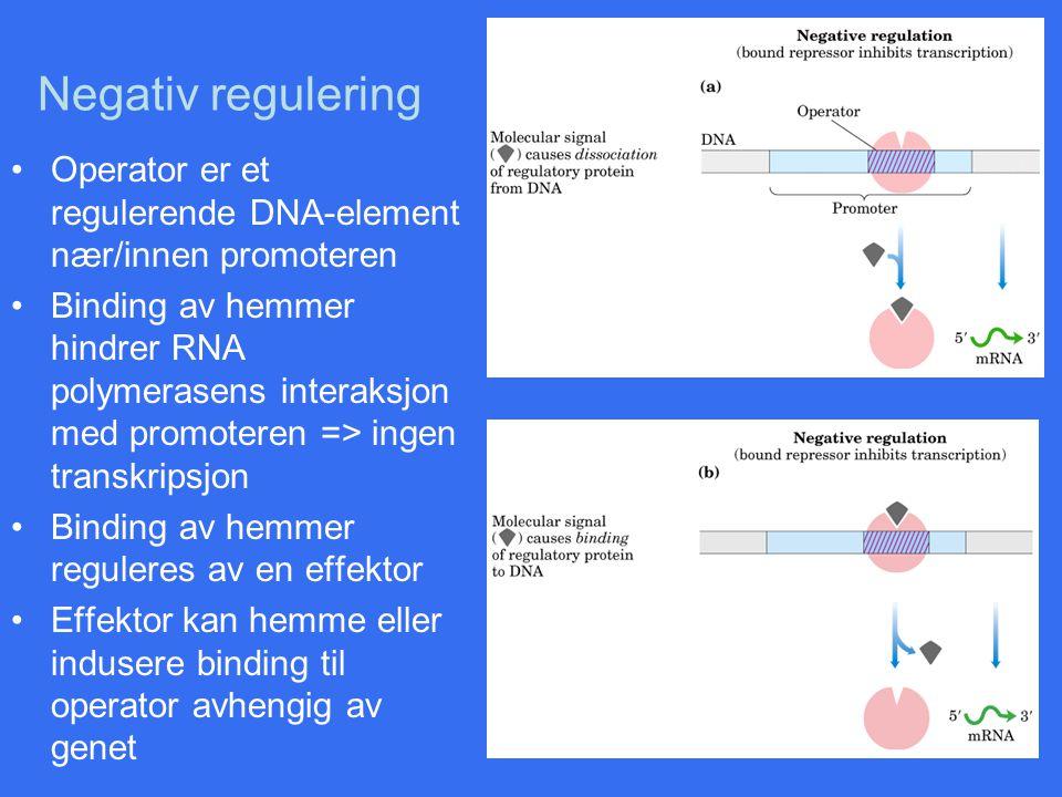 Negativ regulering Operator er et regulerende DNA-element nær/innen promoteren Binding av hemmer hindrer RNA polymerasens interaksjon med promoteren =