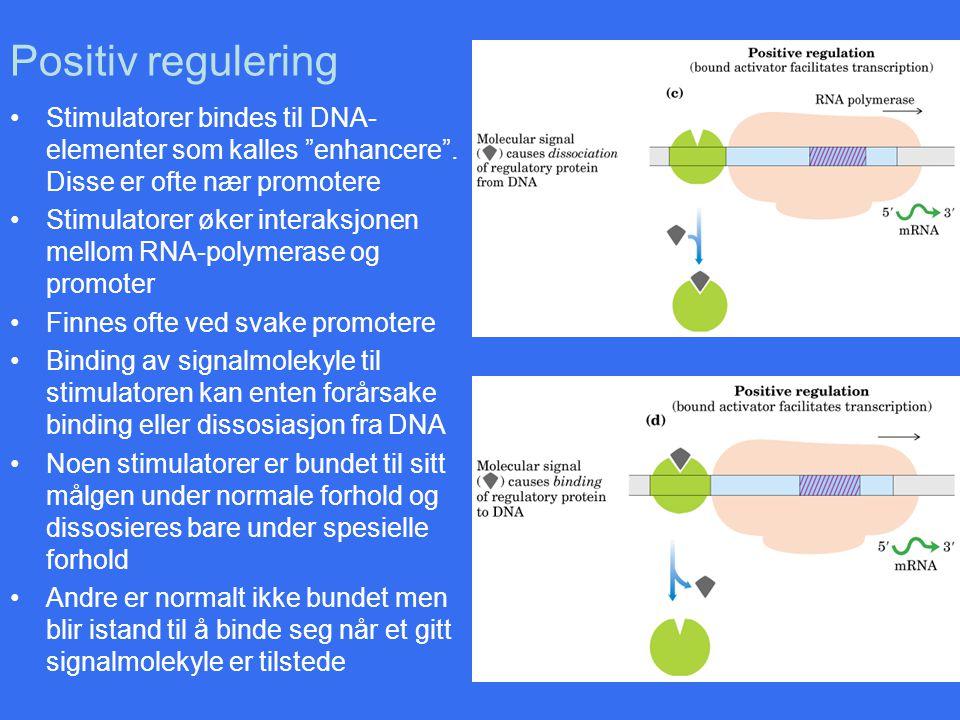 """Positiv regulering Stimulatorer bindes til DNA- elementer som kalles """"enhancere"""". Disse er ofte nær promotere Stimulatorer øker interaksjonen mellom R"""