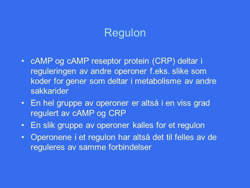 Regulon cAMP og cAMP reseptor protein (CRP) deltar i reguleringen av andre operoner f.eks. slike som koder for gener som deltar i metabolisme av andre
