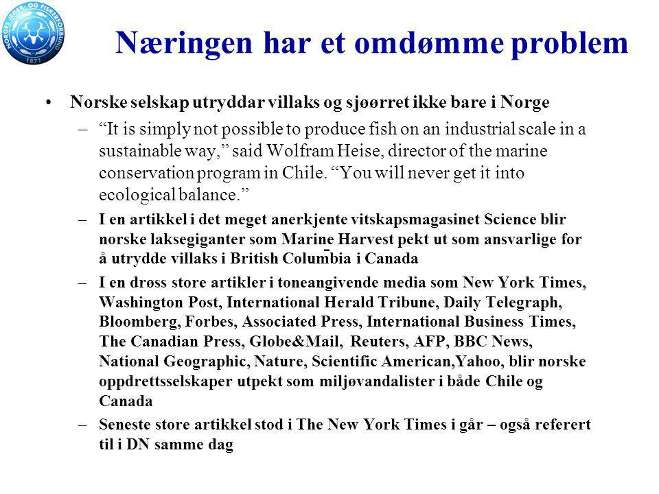 """Næringen har et omdømme problem Norske selskap utryddar villaks og sjøørret ikke bare i Norge –""""It is simply not possible to produce fish on an indust"""