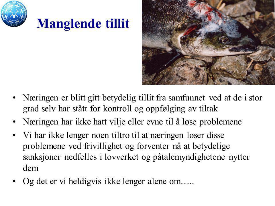 Mer alvorlig enn fryktet De unike norske villaksstammene erstattes sakte men sikkert av ensartede hybrider med gener fra oppdrettslaks.