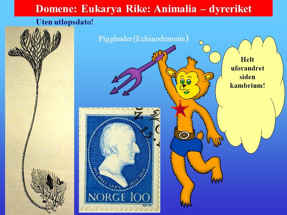 Domene: Eukarya Rike: Animalia – dyreriket Pigghuder (Echinodermata ) Sjøstjernene er oftest rovdyr som kan angripe muslinger og vrenge ut magesekken (og fordøye byttet utafor).