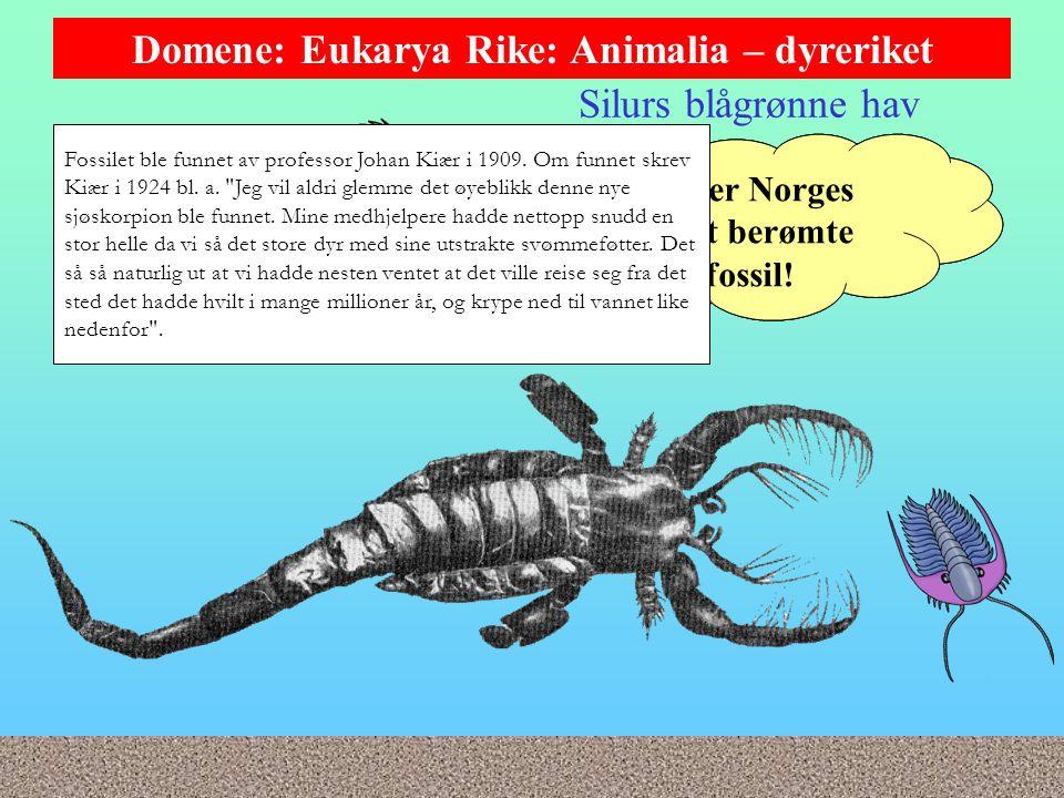 Silurs blågrønne hav Domene: Eukarya Rike: Animalia – dyreriket I silur fantes noen fæle, fjerne slektninger, sjøskorpionene (Eurypterida).