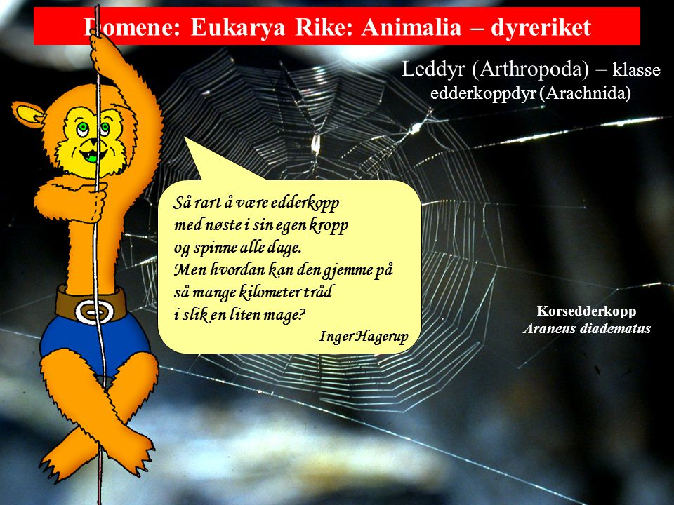 Domene: Eukarya Rike: Animalia – dyreriket Ekte kroppshule Protostomia Deuterostomia Armføttinger (Brachyopoda) Pigghuder (Echinodermata) Kamstjerne Asteropecten irregulare Pilormer (Chaetognatha) Pilorm Sagitta bipunctalis Ryggstrengdyr (Chordata) Hund Canis familiaris Eikenøttormer (Hemichordata) Ptychodera flava Mosdyr (Bryozoa) Lophophus crystallinus Lophophorata ?