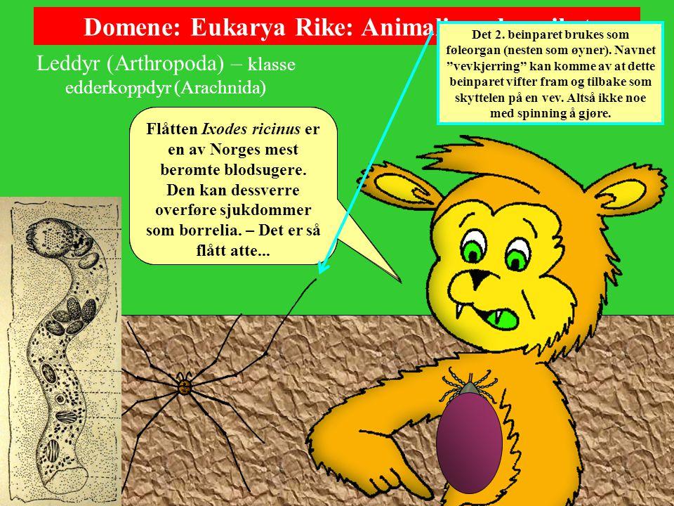 Domene: Eukarya Rike: Animalia – dyreriket Leddyr (Arthropoda) – klasse edderkoppdyr (Arachnida) Edderkoppdyra omfatter flere ordener, her kommer to til – det får greie seg: Vevkjerringene (Opiliones) er noen merkelige skapninger med overdimensjonerte bein og underdimensjonert kropp.