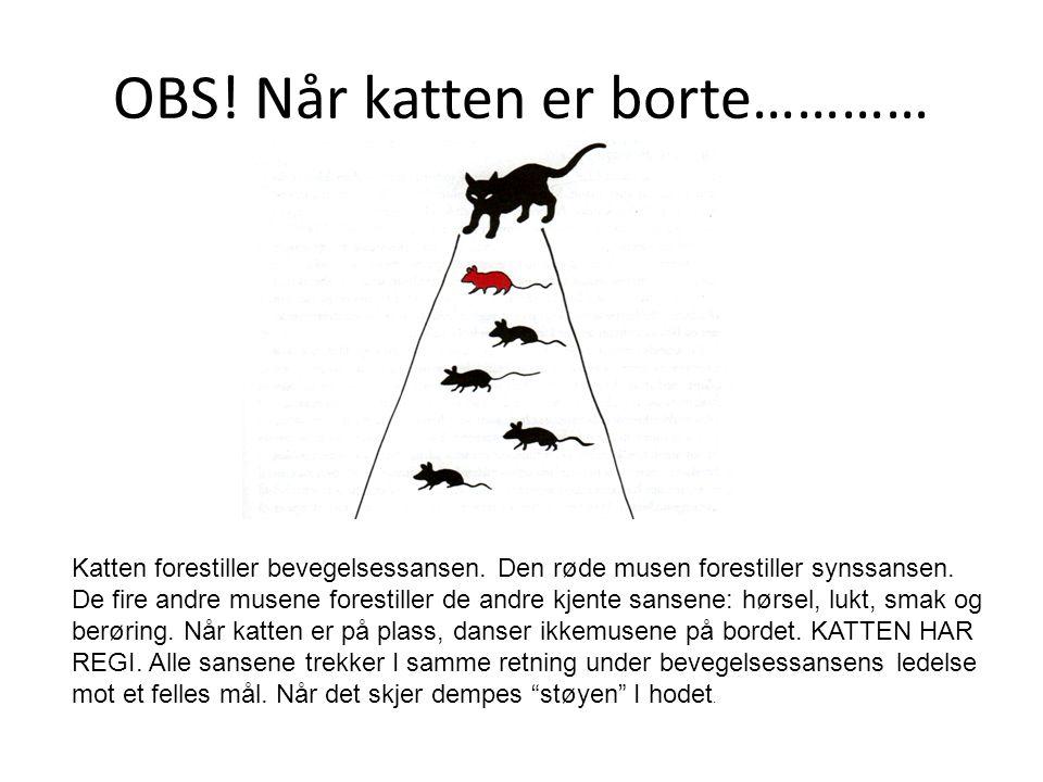 OBS! Når katten er borte………… Katten forestiller bevegelsessansen. Den røde musen forestiller synssansen. De fire andre musene forestiller de andre kje