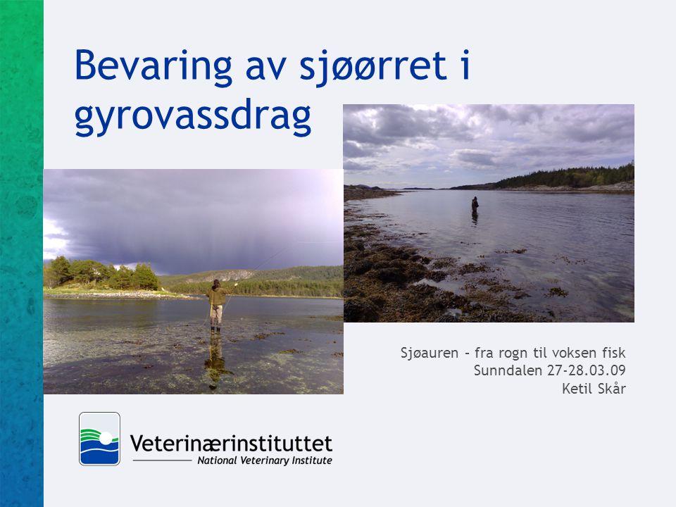 Bevaring av sjøørret i gyrovassdrag Sjøauren – fra rogn til voksen fisk Sunndalen 27-28.03.09 Ketil Skår