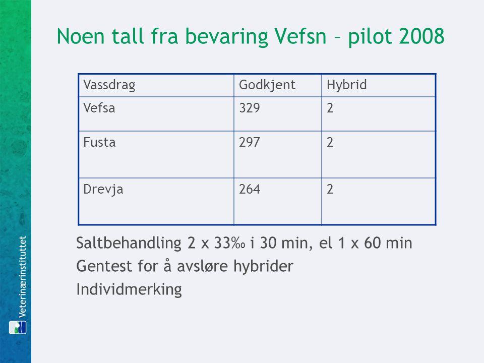 Noen tall fra bevaring Vefsn – pilot 2008 VassdragGodkjentHybrid Vefsa3292 Fusta2972 Drevja2642 Saltbehandling 2 x 33% 0 i 30 min, el 1 x 60 min Gentest for å avsløre hybrider Individmerking
