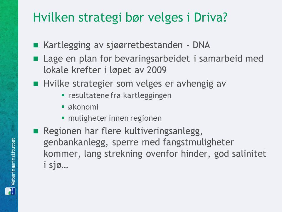 Hvilken strategi bør velges i Driva.