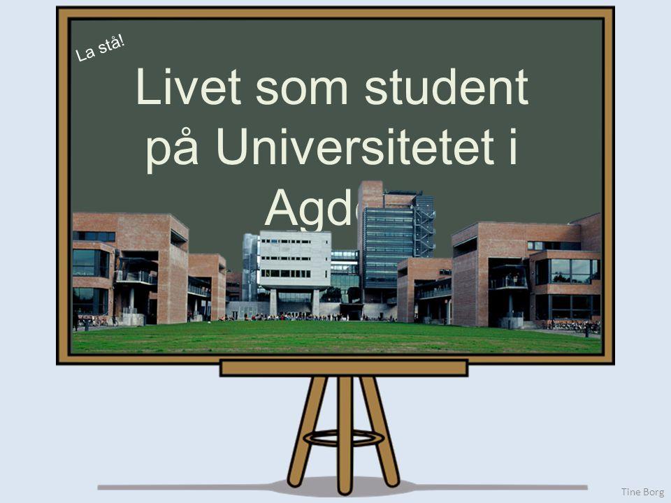 Tine Borg La stå! Livet som student på Universitetet i Agder