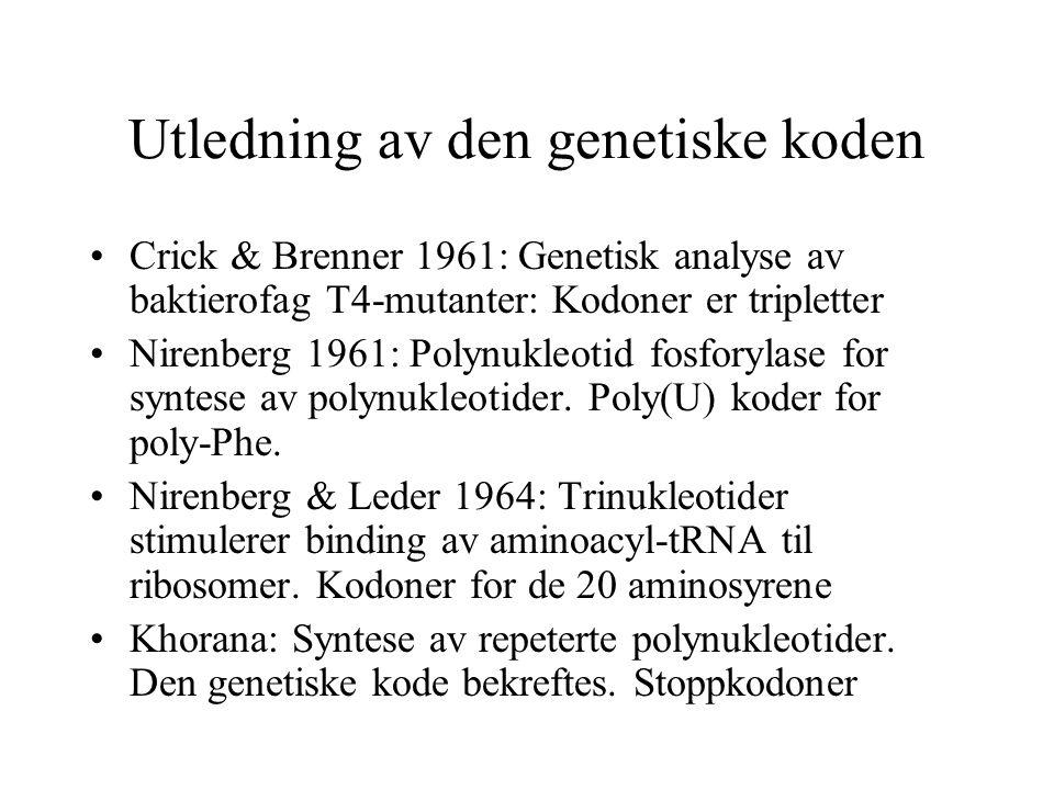 Utledning av den genetiske koden Crick & Brenner 1961: Genetisk analyse av baktierofag T4-mutanter: Kodoner er tripletter Nirenberg 1961: Polynukleoti