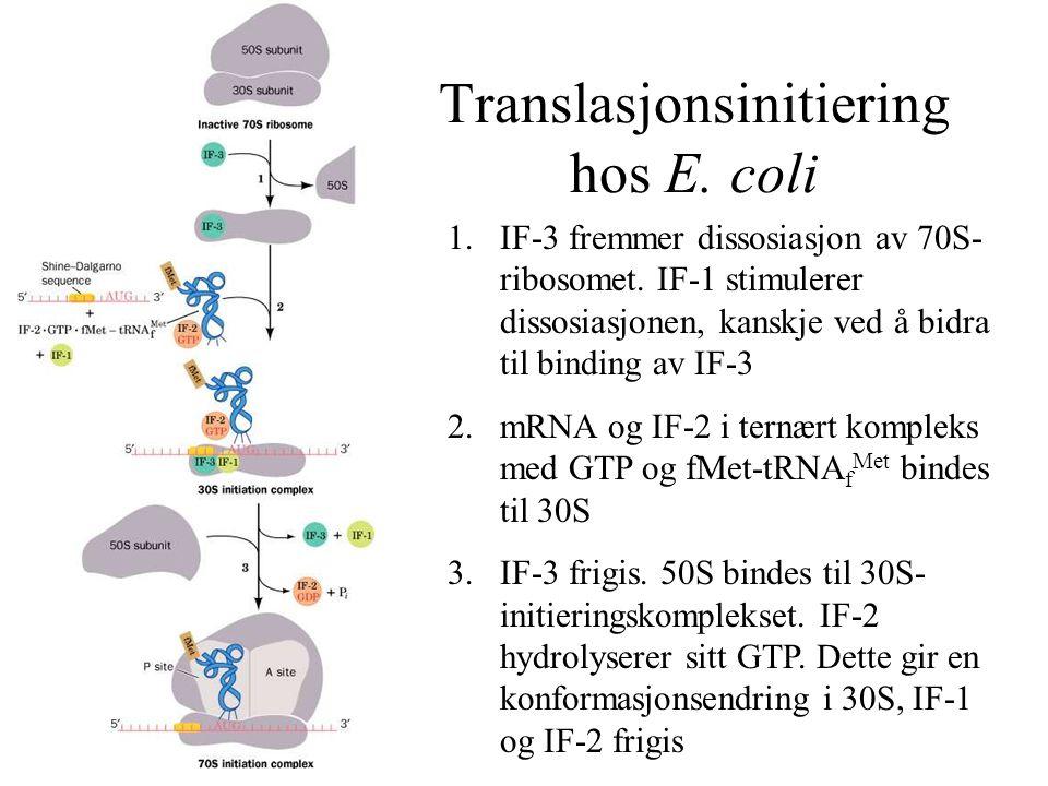 Translasjonsinitiering hos E. coli 1.IF-3 fremmer dissosiasjon av 70S- ribosomet. IF-1 stimulerer dissosiasjonen, kanskje ved å bidra til binding av I
