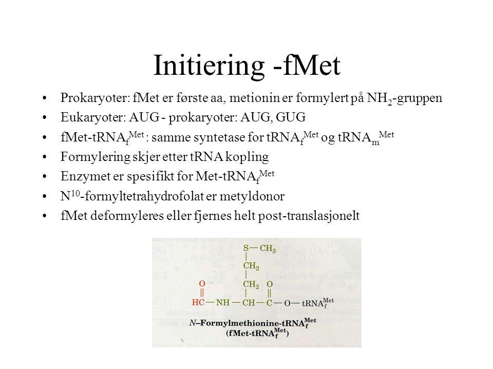 Initiering -fMet Prokaryoter: fMet er første aa, metionin er formylert på NH 2 -gruppen Eukaryoter: AUG - prokaryoter: AUG, GUG fMet-tRNA f Met : samm
