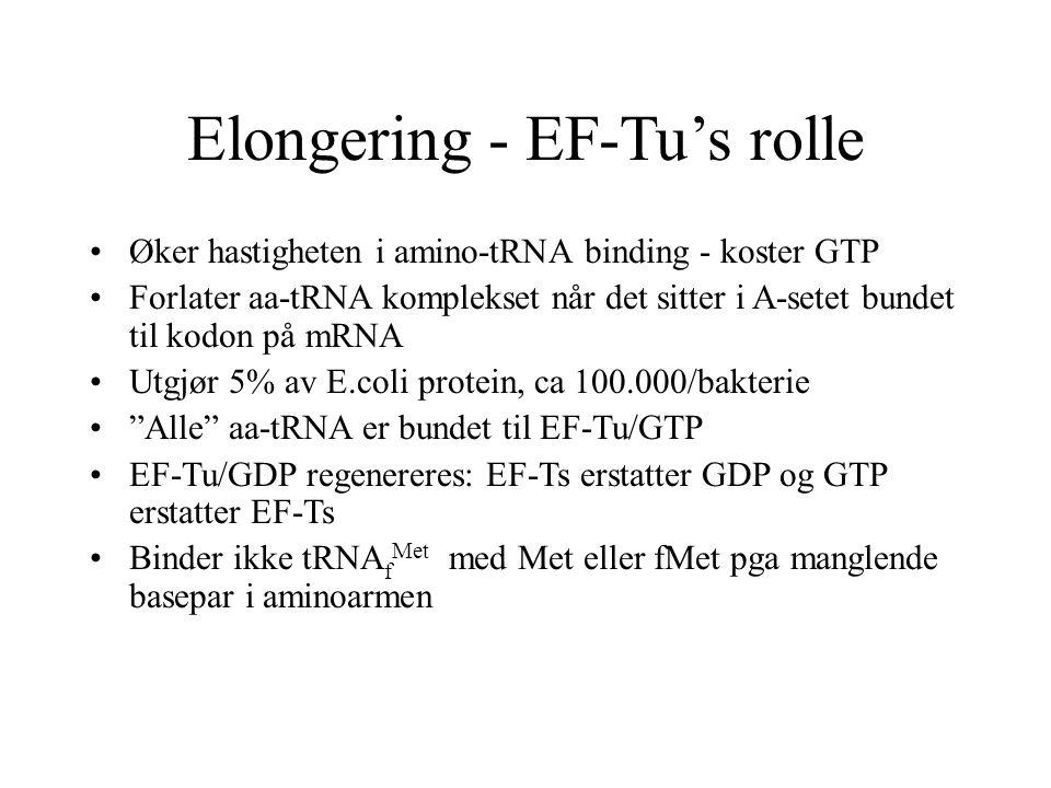 Elongering - EF-Tu's rolle Øker hastigheten i amino-tRNA binding - koster GTP Forlater aa-tRNA komplekset når det sitter i A-setet bundet til kodon på