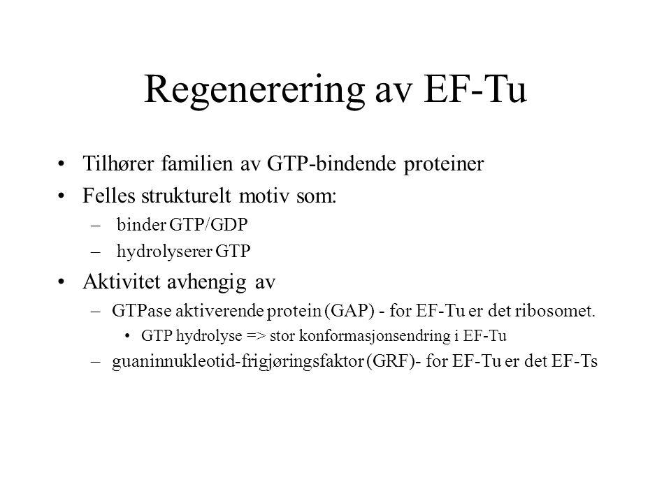 Regenerering av EF-Tu Tilhører familien av GTP-bindende proteiner Felles strukturelt motiv som: – binder GTP/GDP – hydrolyserer GTP Aktivitet avhengig