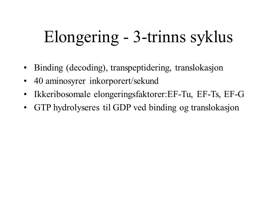 Elongering - 3-trinns syklus Binding (decoding), transpeptidering, translokasjon 40 aminosyrer inkorporert/sekund Ikkeribosomale elongeringsfaktorer:E