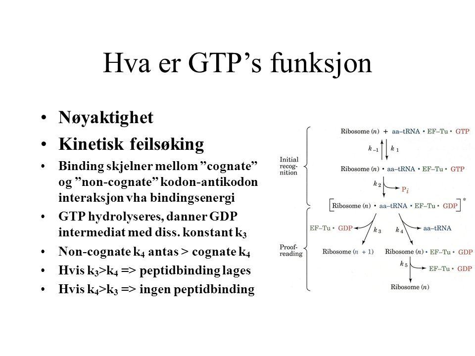 """Hva er GTP's funksjon Nøyaktighet Kinetisk feilsøking Binding skjelner mellom """"cognate"""" og """"non-cognate"""" kodon-antikodon interaksjon vha bindingsenerg"""