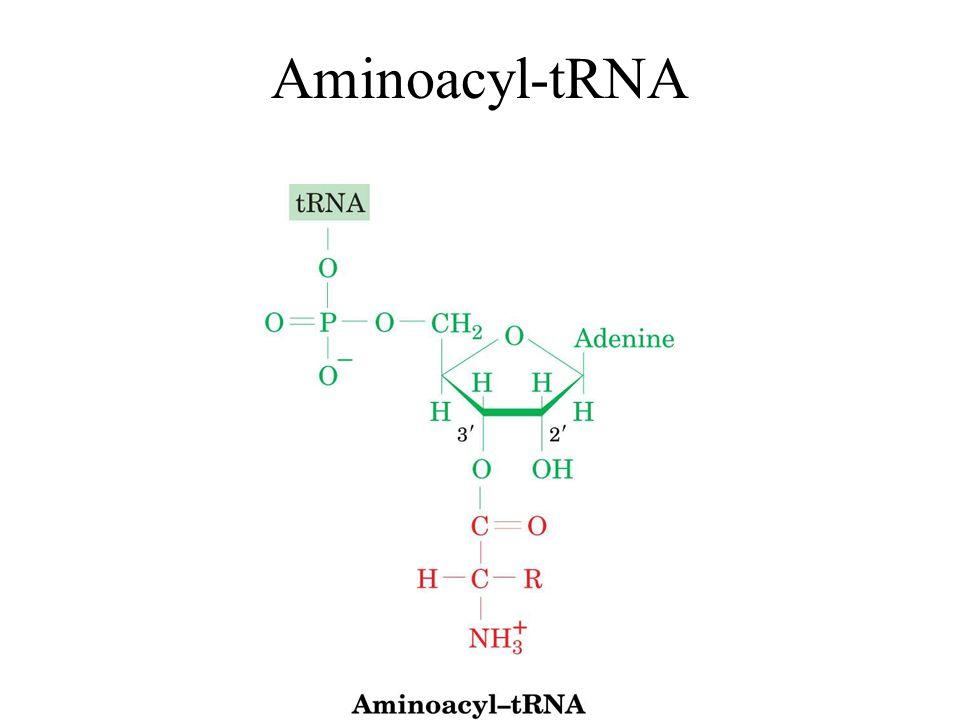 Puromycin sammenlignet med tyrosyl-tRNA