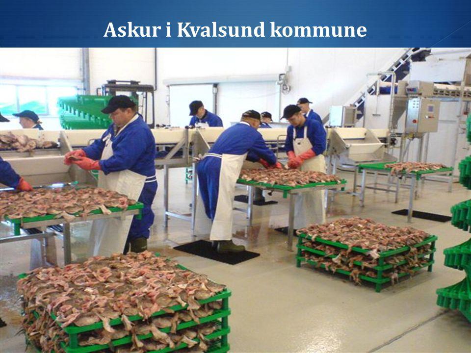 Askur i Kvalsund kommune