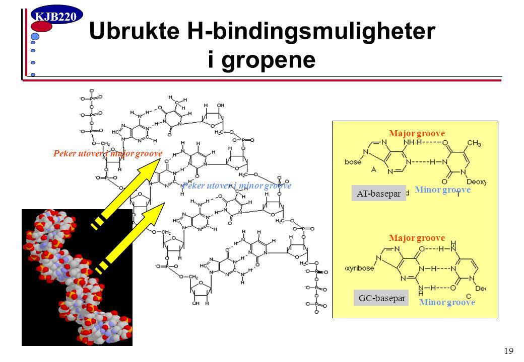 KJB220 19 Ubrukte H-bindingsmuligheter i gropene AT-basepar GC-basepar Peker utover i major groove Peker utover i minor groove Major groove Minor groo