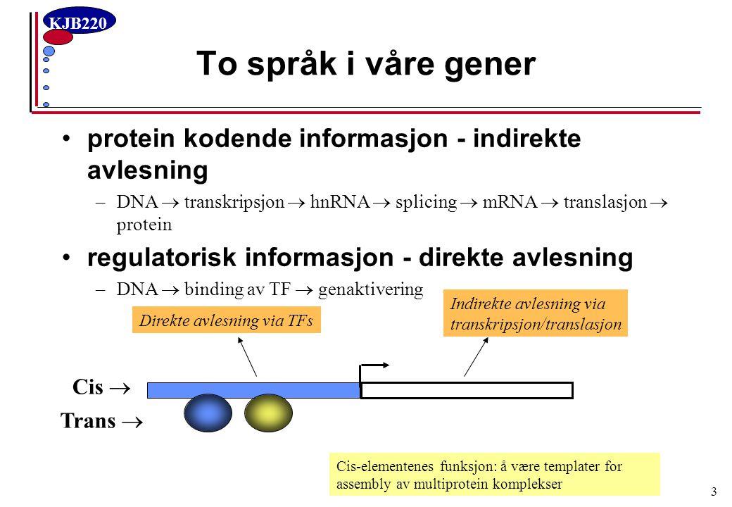 KJB220 3 To språk i våre gener protein kodende informasjon - indirekte avlesning –DNA  transkripsjon  hnRNA  splicing  mRNA  translasjon  protei